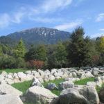 Arboreto del Tesino