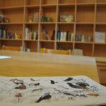 Casa_Magnola_biblioteca